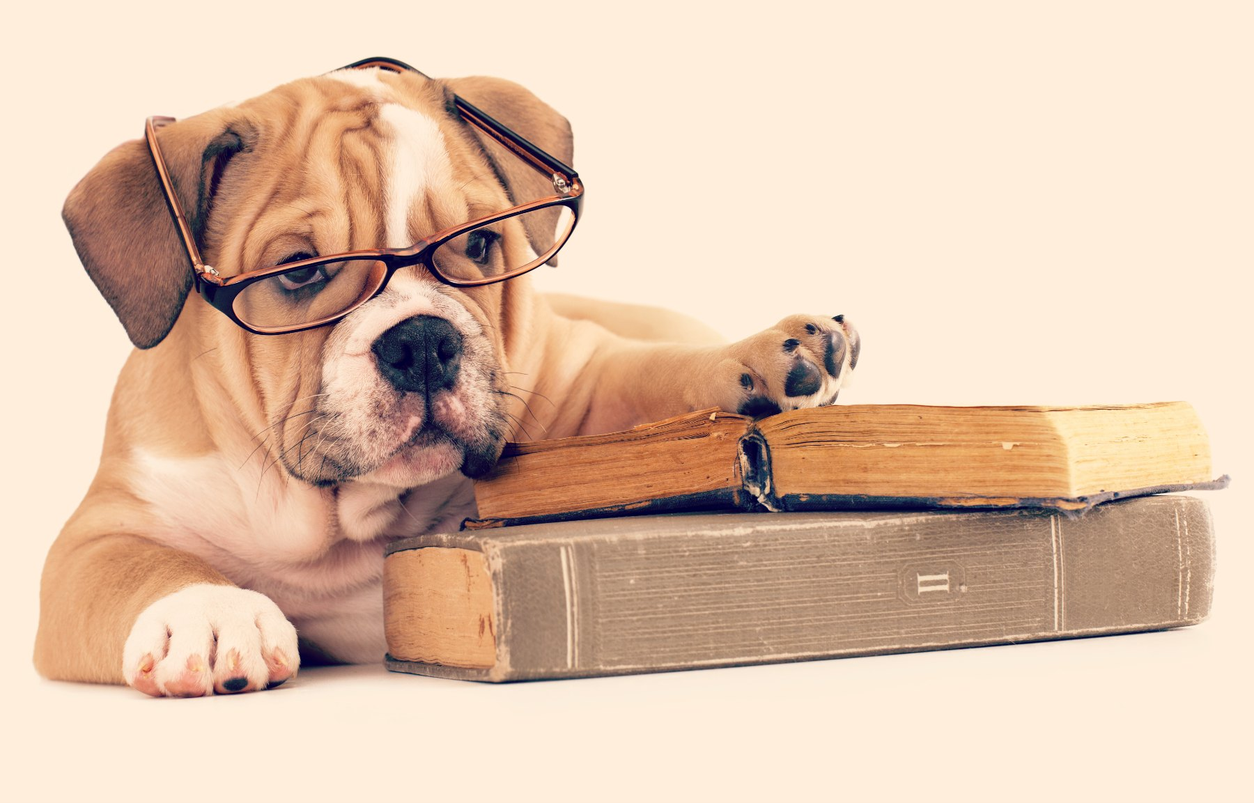 Literary Pet Names: Canine Edition |Puppy Reading