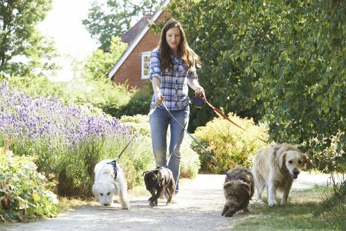 Pet Care: a recession-proof business?